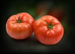 main_tomatoes
